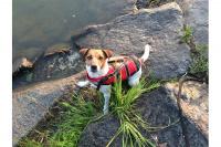 Plovací vesty pro psy – Max a Benny na člunu v Chorvatsku. (6)