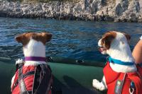 Plovací vesty pro psy – Max a Benny na člunu v Chorvatsku.