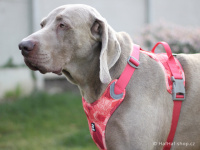 Ergonomický nastavitelný postroj pro psy HURTTA z měkkého prodyšného polyesteru se zvýšenou odolností vůči povětrnostním vlivům. Barva červená, vzor Coral CAMO. (FOTO 3)