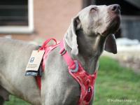 Ergonomický nastavitelný postroj pro psy HURTTA z měkkého prodyšného polyesteru se zvýšenou odolností vůči povětrnostním vlivům. Barva červená, vzor Coral CAMO. (FOTO 4)