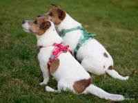 Ergonomický nastavitelný postroj pro psy HURTTA z měkkého prodyšného polyesteru se zvýšenou odolností vůči povětrnostním vlivům. Barva červená. (FOTO)