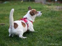 Ergonomický nastavitelný postroj pro psy HURTTA z měkkého prodyšného polyesteru se zvýšenou odolností vůči povětrnostním vlivům. Barva červená. (FOTO 3)