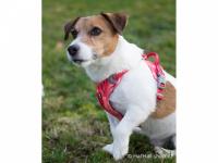 Ergonomický nastavitelný postroj pro psy HURTTA z měkkého prodyšného polyesteru se zvýšenou odolností vůči povětrnostním vlivům. Barva červená. (FOTO 4)