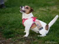 Ergonomický nastavitelný postroj pro psy HURTTA z měkkého prodyšného polyesteru se zvýšenou odolností vůči povětrnostním vlivům. Barva červená. (FOTO 6)
