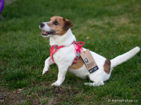 Ergonomický nastavitelný postroj pro psy HURTTA z měkkého prodyšného polyesteru se zvýšenou odolností vůči povětrnostním vlivům. Barva červená. (FOTO 7)