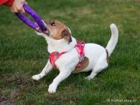Ergonomický nastavitelný postroj pro psy HURTTA z měkkého prodyšného polyesteru se zvýšenou odolností vůči povětrnostním vlivům. Barva červená. (FOTO 8)