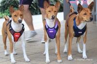 Postroj pro psy značky ForMyDogs v tmavě modré barvě. Pevný odolný materiál, polstrování na hrudníku, bezpečnostní reflexní prvky (2).