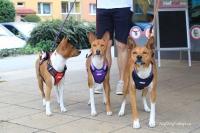 Postroj pro psy značky ForMyDogs v tmavě modré barvě. Pevný odolný materiál, polstrování na hrudníku, bezpečnostní reflexní prvky (4).