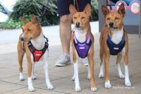 Postroj pro psy značky ForMyDogs v tmavě modré barvě. Pevný odolný materiál, polstrování na hrudníku, bezpečnostní reflexní prvky (5).