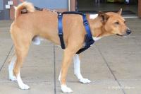 Postroj pro psy značky ForMyDogs v tmavě modré barvě. Pevný odolný materiál, polstrování na hrudníku, bezpečnostní reflexní prvky (7).