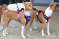 Postroj pro psy značky ForMyDogs v zářivě fialové barvě. Pevný odolný materiál, polstrování na hrudníku, bezpečnostní reflexní prvky (2).