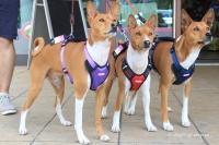 Postroj pro psy značky ForMyDogs v zářivě fialové barvě. Pevný odolný materiál, polstrování na hrudníku, bezpečnostní reflexní prvky (6).