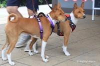 Postroj pro psy značky ForMyDogs v zářivě fialové barvě. Pevný odolný materiál, polstrování na hrudníku, bezpečnostní reflexní prvky.