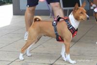 Postroj pro psy značky ForMyDogs v černo-červené barvě. Pevný odolný materiál, polstrování na hrudníku, bezpečnostní reflexní prvky (5).