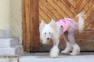 FOTO – Oblečky pro psy – růžové šaty pro fenky od ForMyDogs z tenké pleteniny s tylovou baletní sukní (2)
