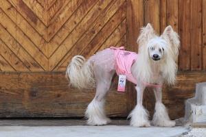 FOTO – Oblečky pro psy – růžové šaty pro fenky od ForMyDogs z tenké pleteniny s tylovou baletní sukní