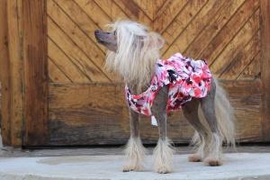 FOTO – Oblečky pro psy – krásné elegantní šaty pro fenky z krepu s květinovým potiskem