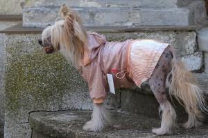 FOTO – Oblečky pro psy – šaty pro fenky od ForMyDogs – růžové se skládanou sukní (2)