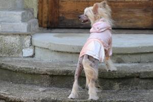 FOTO – Oblečky pro psy – šaty pro fenky od ForMyDogs – růžové se skládanou sukní (3)