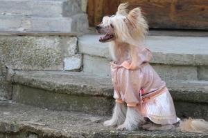 FOTO – Oblečky pro psy – šaty pro fenky od ForMyDogs – růžové se skládanou sukní