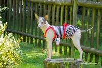 Obleček pro fenky – stylové šaty od For My Dogs. Materiál bavlna/elastan, modrobílý pruhovaný vzor, červená mašle na zádech (3)