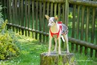 Obleček pro fenky – stylové šaty od For My Dogs. Materiál bavlna/elastan, modrobílý pruhovaný vzor, červená mašle na zádech (4)