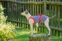 Obleček pro fenky – stylové šaty od For My Dogs. Materiál bavlna/elastan, modrobílý pruhovaný vzor, červená mašle na zádech (2)