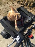 Praktický přepravní box-taška na psa k připevnění na řídítka. Foto zákazníků. (3)
