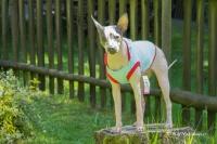 Obleček pro psy i fenky – stylové tílko od For My Dogs (2)