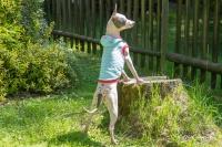 Obleček pro psy i fenky – stylové tílko od For My Dogs (4)