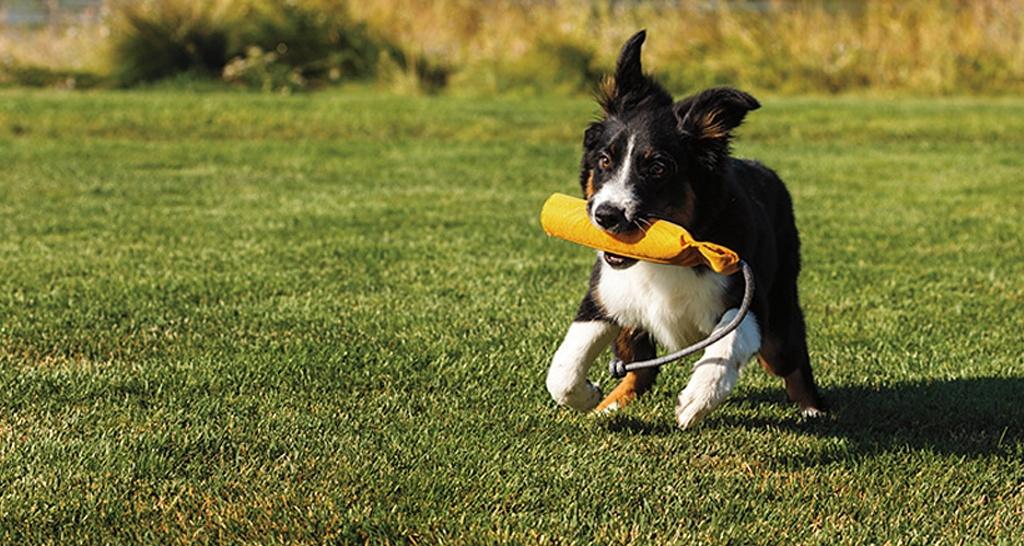 Odolná hračka pro psy od RUFFWEAR
