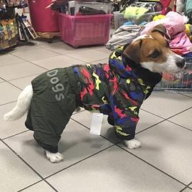 JRT v overalu pro psy od FMD