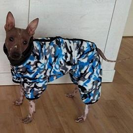 Amigo v modrém zimním overalu pro psy