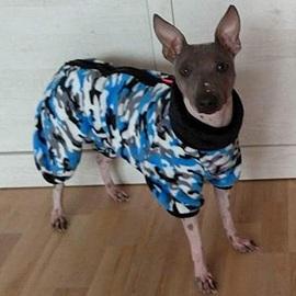 Chees v modrém overalu pro psy