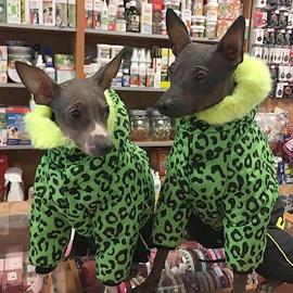 Eimy a Aischa v psích oblečcích