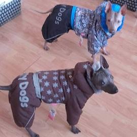 Elf a Habanero v oblečcích pro psy