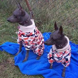 Jessie a Nanana v maskáčových psích overalech