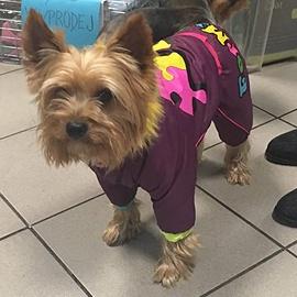 Yorkšír v psím oblečku FMD