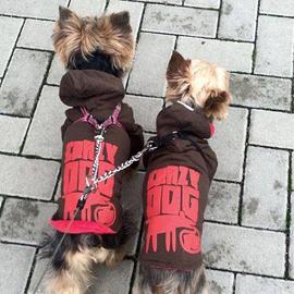 Dva yorkšíři v zimních bundách