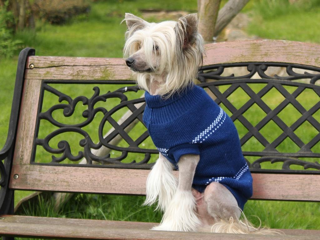 Oblečky pro psy – Modrý pletený svetr pro psy