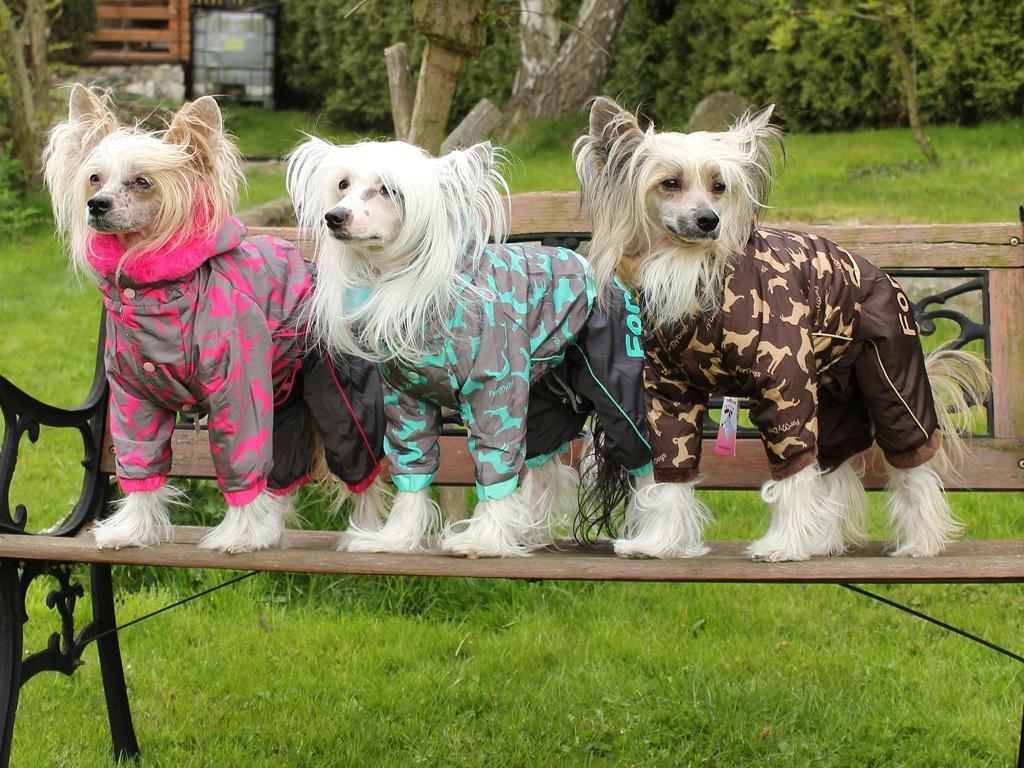 Oblečky pro psy FMD – Nepromokavý zimní overal pro psy For My Dogs