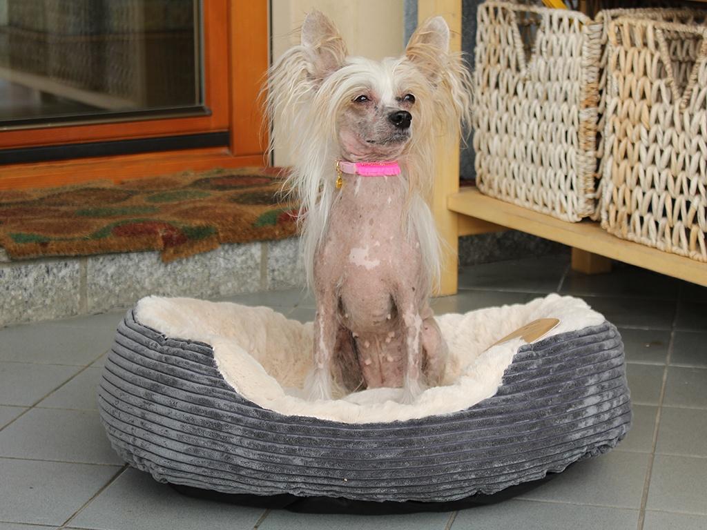 Manžestrový pelíšek pro psy
