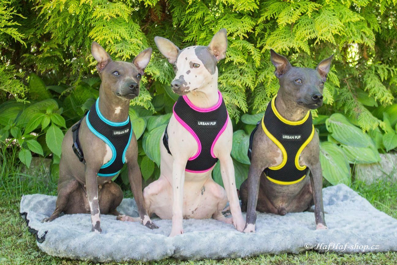 Nastavitelný hrudní postroj pro psy – žlutý