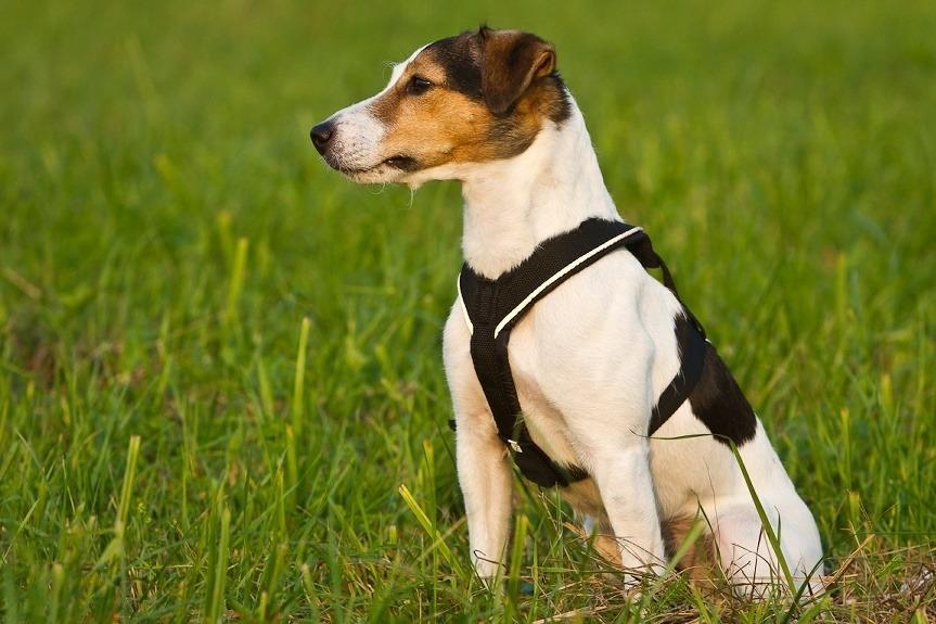 Univerzální postroj pro psy – pro vedení psa na vodítku i pro sportovní aktivity