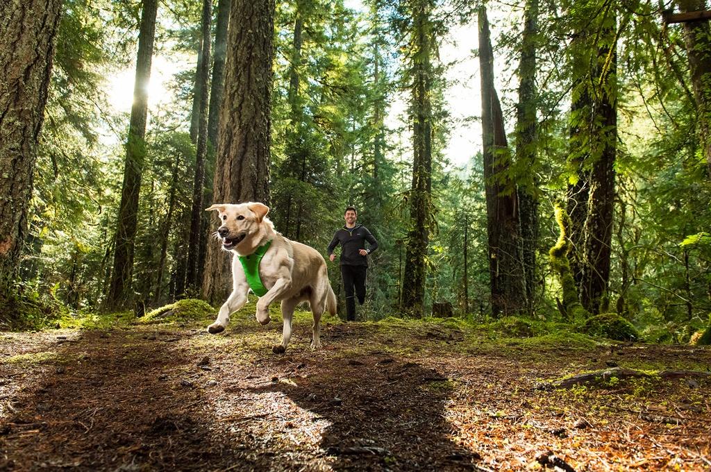 Postroj pro psy RUFFWEAR Front Range – zelený