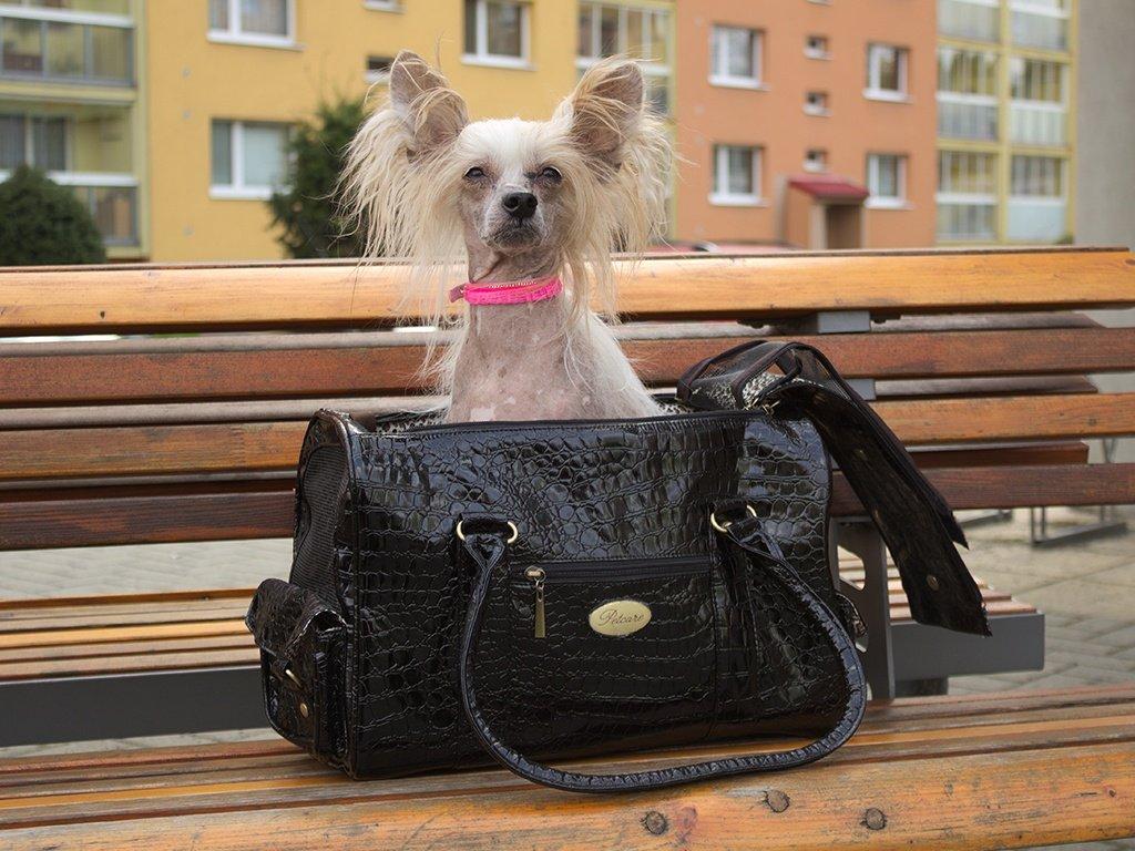Čínský chocholatý pes v černé luxusní tašce na psy
