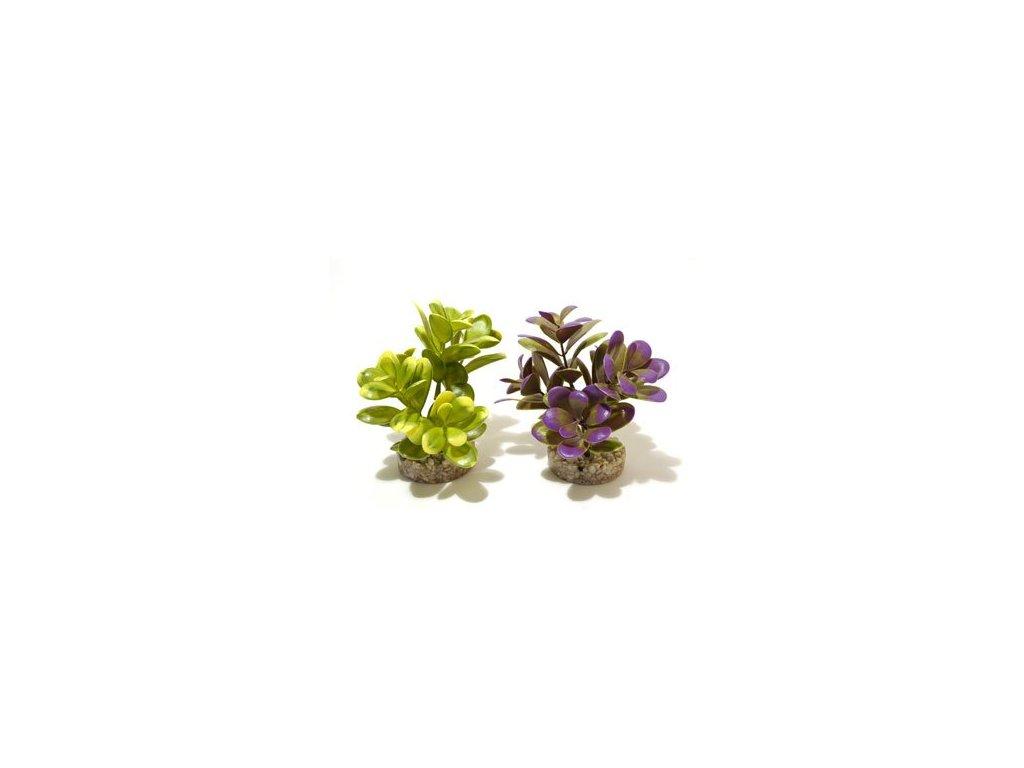 Rostlina Pebble Leaves 14