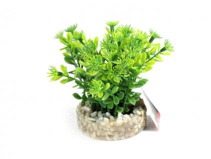 sydeco rostlina do akvaria 19