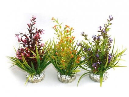 Rostlina Flowering Plant