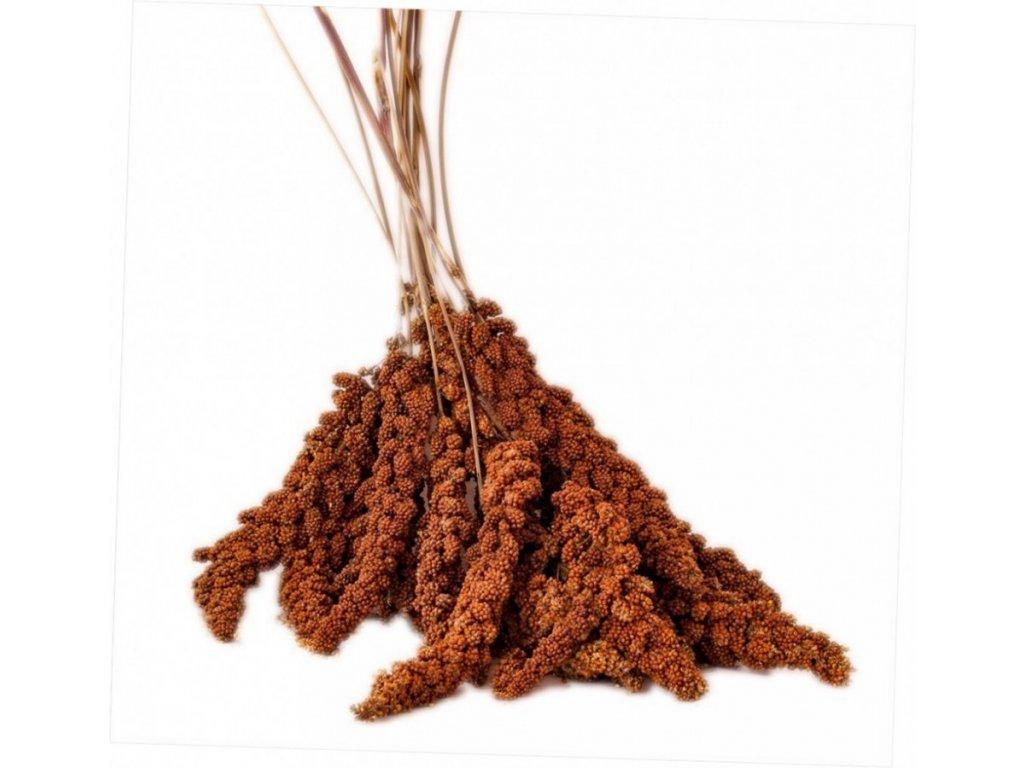 Senegalské proso červené 100 g